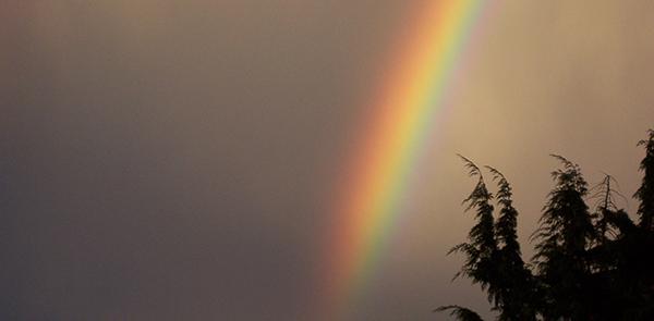 Rainbow_up_close